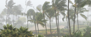 Tropical Storm (1)