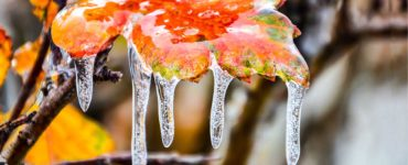 icicles on an autumn colored leaf