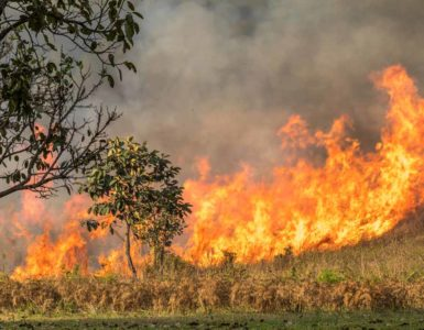 Brushfire rips through the undergrowth on an open plain