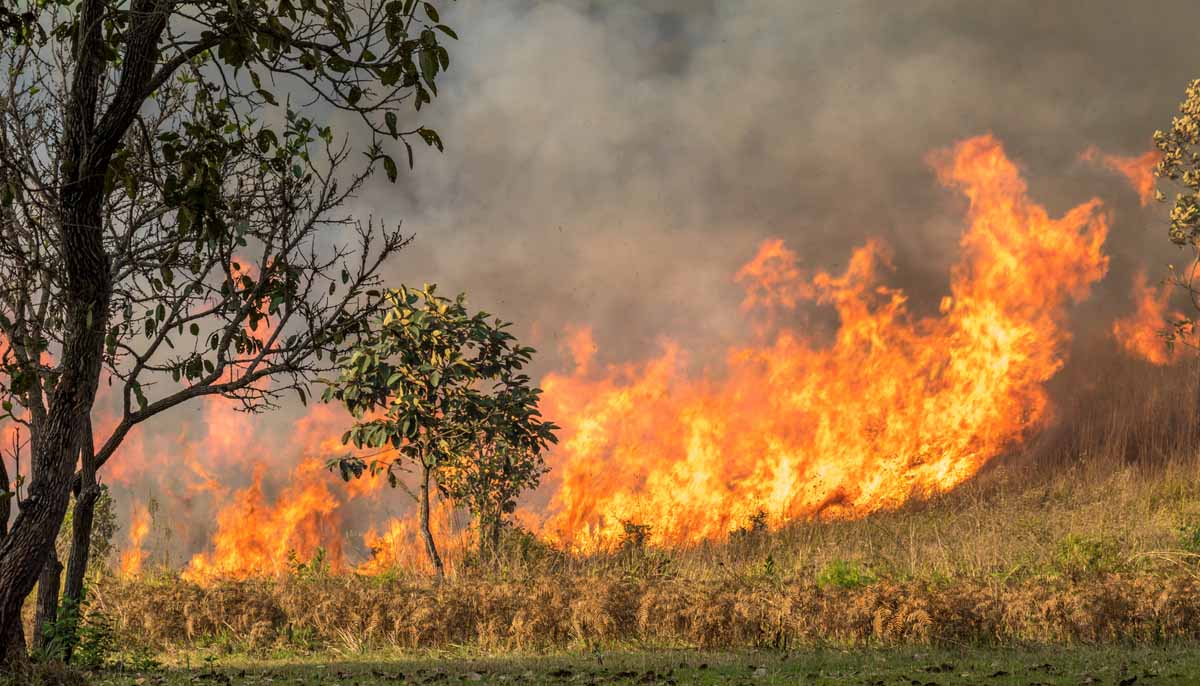 Australian Wildfires to Burn for Many More Months - Local ...
