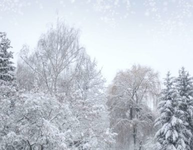 a forest of trees covered in snow on a cold winter day