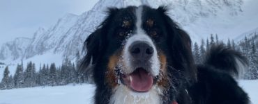 Parker the Snow Dog in the mountains covered in snow and smiling