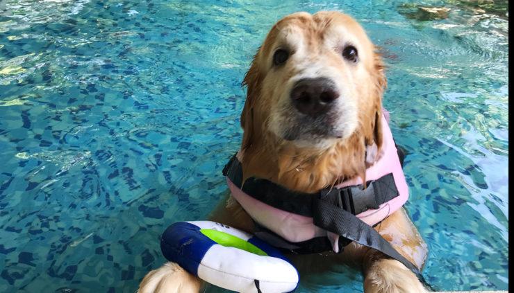 Dog-Lifeguard