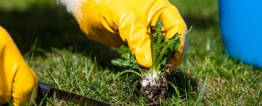 a person pulling weeds from the ground wearing yellow gardening gloves