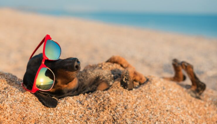 dog relaxing on the beach with sunglasses