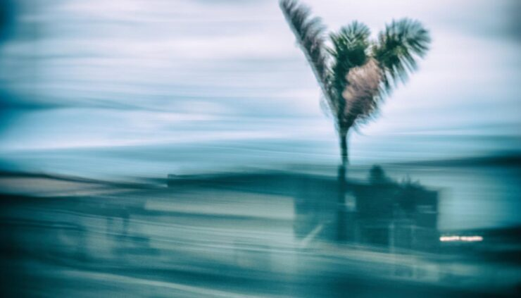 abstract blurred palm trees in motion during a storm