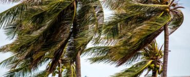 high winds through palms in Hawaii
