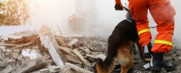 rescuer searches rubble with dog