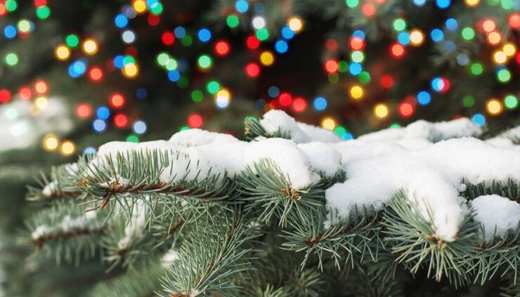 snow on trees with christmas lights