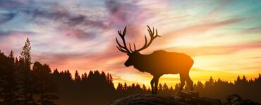 a moose in front of a setting sun
