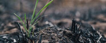 burned earth and new life