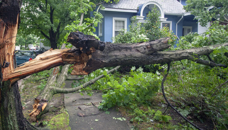 downed tree after a storm
