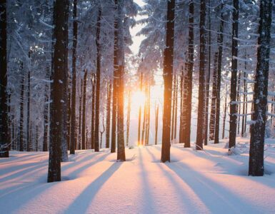 sun coming through the trees in a snowy forest