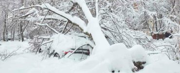 car under snow and fallen trees