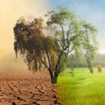 NOAA, NASA Confirm: 2020 Ties Hottest Year Ever