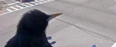 bird perches on security camera