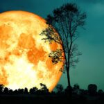 How to See the Flower, Blood Supermoon, and Lunar Eclipse This Week