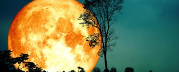 Artist illustration of blood moon silhouetted against a dark landscape of trees
