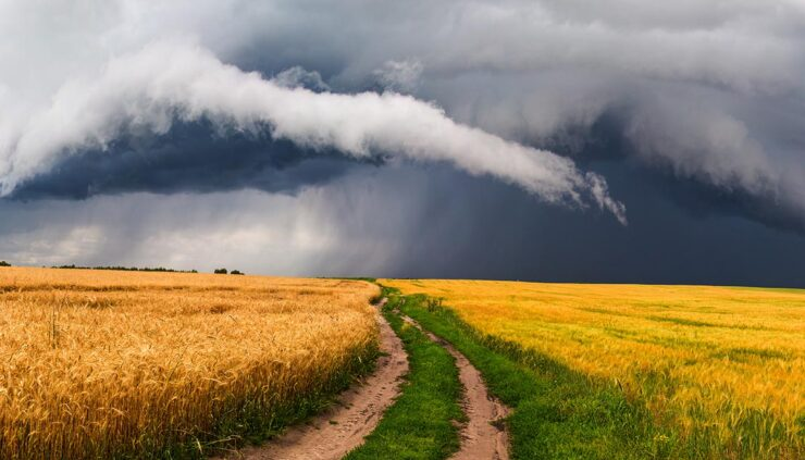Summer storm rolling in over a cornfield